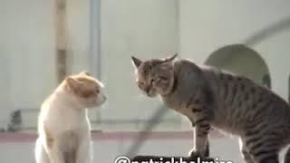 Gato Tentando Tirar Espírito Cachaceiro Do Outro