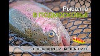 Рыбалка на платниках в московской области