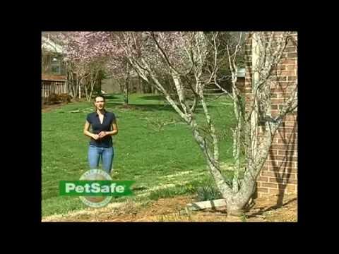 Petsafe Inground fence planning and installation video