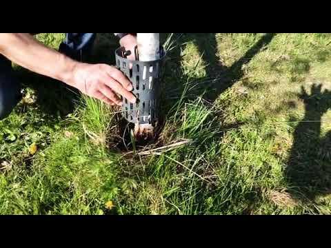 Tüvekaitse TREEMEX (5 tk) tumehall