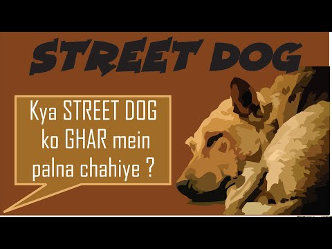 Know your dog breed - Indian Street Dog as pet   Desi Dog