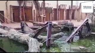 Elefanten im Zoo Magdeburg