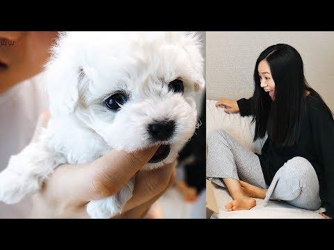 妇女节弟弟送了一只小狗狗给单身姐姐, 场面好感人!