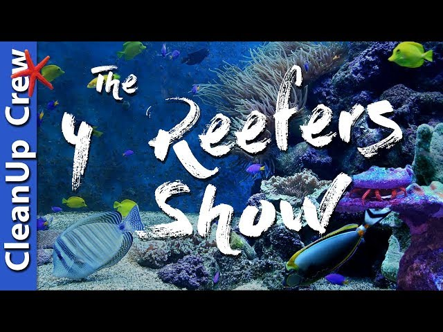 Clean up Crew For a Saltwater Tank - The 4 Reefers Show Episode 3