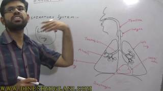 HUMAN RESPIRATORY  SYSTEM GENERAL SCIENCE SESSION 7  FOR SSC CGL CHSL GOVERNMENT JOB CLAT