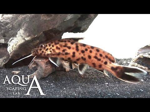 Pesca di voce di Kama di una fotografia