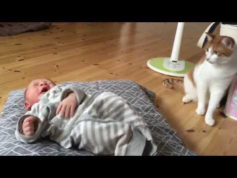 Yenidoğan bebekle kedilerin ilk buluşması
