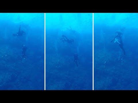 У берегов Египта на дайвера напала акула