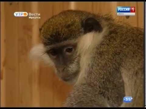Выпуск «Вести-Иркутск» 06.02.2019 (05:35)