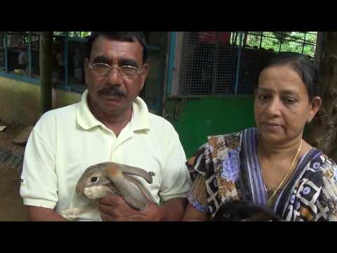 Video Blessing Garden Rabbit Farm di India, Peternakan kelinci di india