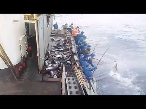 Câu cá không cần mồi chỉ cần thả cần xuống là giật liên tục, liên tục.....