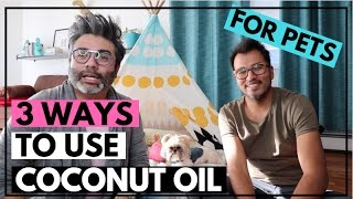 Coconut Oil for Dogs | 3 Ways Dogs Can Use Coconut Oil | Shih Tzu Using Coconut Oil | Dog Skin