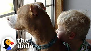 Kid Writes Letter To Santa Thanking Him For His Rescue Pittie | The Dodo Pittie Nation by The Dodo