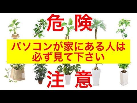 , title : '【買って得する観葉植物10選】パソコンが家にある人は必見です~NASAが25年かけて研究した空気清浄機能を持つ植物〜観葉植物の育て方アドバイス【ガーデニング】【園芸】シックハウス症候群
