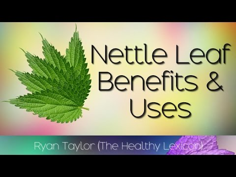 Video Nettle Leaf: Benefits and Uses