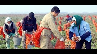 Схема Назарбаева по продаже земли Казахстана китайцам