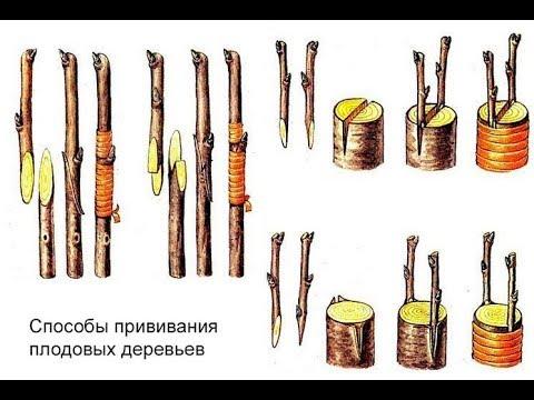 ПРИВИВКА ПЛОДОВЫХ ч.2. ВИДЫ И ПРИМЕНЕНИЕ