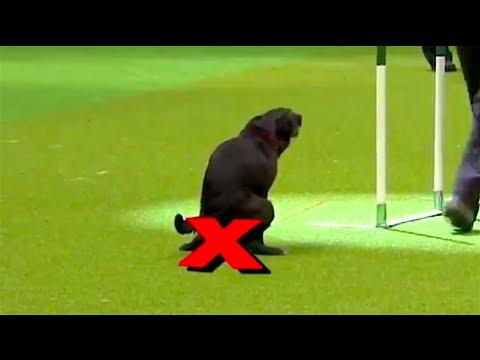 Problémoví psi