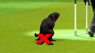 Ozzy Man Reviews: Rebellious Dogs