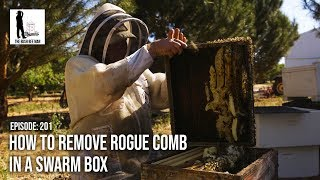 How to Remove Rogue Comb in a Swarm Box - The Bush Bee Man