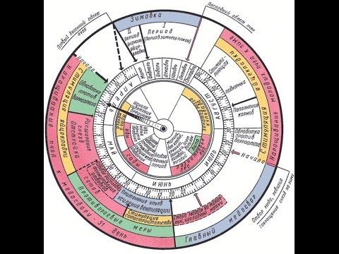 Календарь вывода маток и план календарь работ - Calendar O Königinnen und Kalenderarbeitsplan