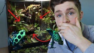 Bioactive Dart Frog Setup Tutorial || Step By Step