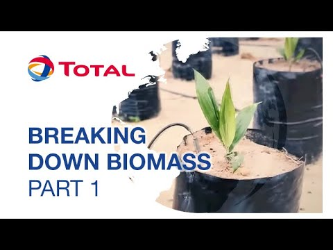 Biomass : the most basic of energy sources (part 1/2) | Sustainable Energy