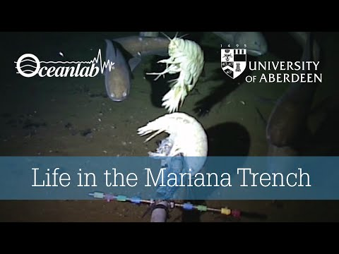 Life in Mariana Trench
