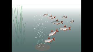 Tabletki Musujące Nowość W Nęceniu Ryb