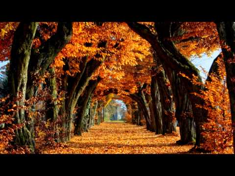 Красивая природа и музыка.Фильм 12