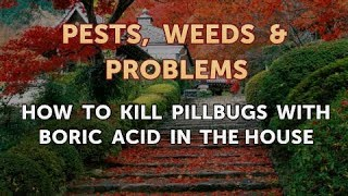 How to Kill Pillbugs With Boric Acid in the House
