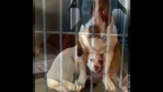 Adopt ME TV - Pet Adoption Networking