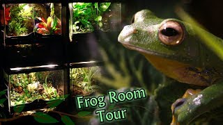 23 Pet Frogs!!!! My Frog Room Tour | Electra Snow