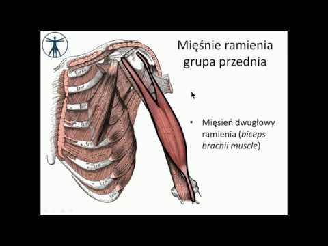 Jak mięśnie pracują podczas skoku