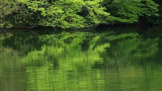 新緑の鶏頭場の池