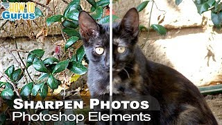 Photoshop Elements Sharpen Blurry Photo : Sharpening Techniques