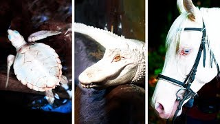 23 Albino Animals That Have Rarely Ever Been Seen