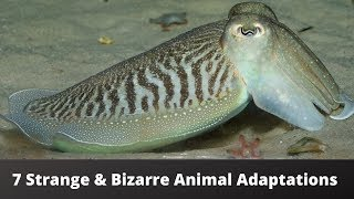 7 STRANGE & BIZARRE Animal Adaptations!