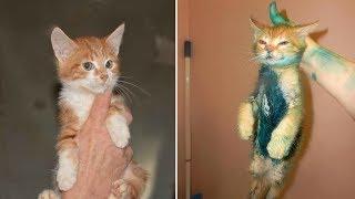 Смешные кошки и коты Смешные коты до слез – МатроскинТВ (Ожидание и реальность) 2019