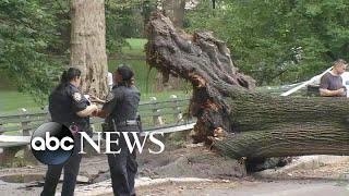Mom, 3 children injured by fallen tree in Central Park