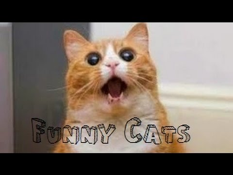 Funny Videos 2014 – Funny Cats Compilation – Funny Animals