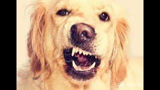 როგორ გამოვავლინოთ ცოფის სიმპტომები ძაღლებში
