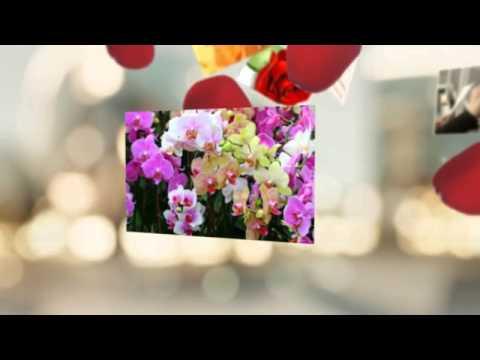 Красивое и оригинальное поздравление С днем учителя! Красивые видеооткрытки!