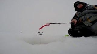 Зимняя рыбалка на Волге. Ловля судака и берша  на тюльку в  Камском устье.