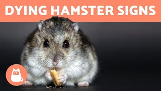 How to Know If Your HAMSTER is DYING 🐹 (5 Symptoms)