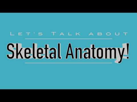 Skeletal Anatomy Dogs, Cats, Horses, Cows (VETERINARY TECHNICIAN EDUCATION)