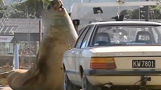 10 MAIORES ANIMAIS DO MUNDO - Video Youtube