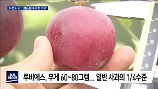 탁구공보다 조금 큰 사과 인기