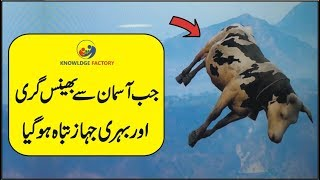 When Cow Falls From Sky The Mysterious Incident
