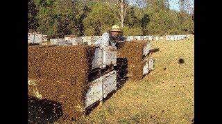 Все Секреты Пчеловодства!!!!! КАК НЕ НАДО ДЕЛАТЬ?!!!